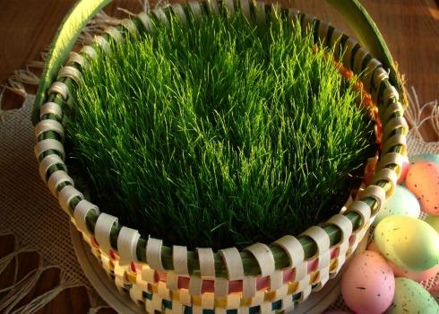 easter grass after 12 days