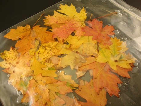 leaves in solution