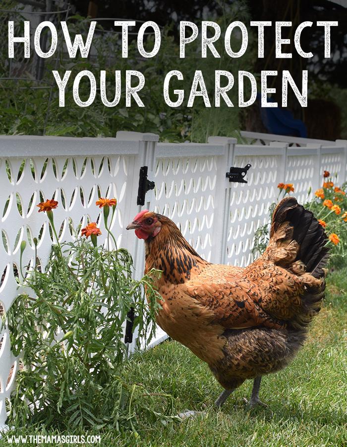 how to enclose a garden for protection